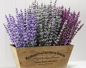 3D model Lavender