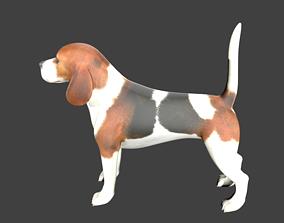 3D asset lowpoly dog