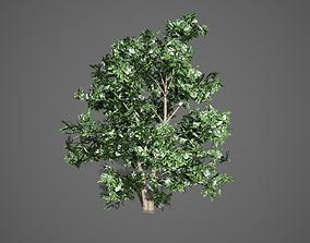 3D model Korean Stewartia Spring Tree