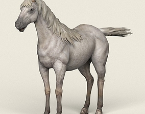 Game Ready White Horse 3D model low-poly