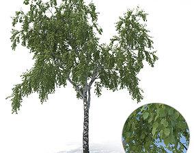 3D Birch Tree No 3 Summer Version