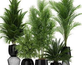 Plants collection 184 3D