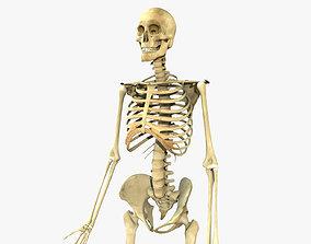 Human Skeleton Full Body 3D