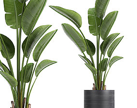 3D model Strelitzia in a pot for the interior 723