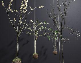 String Garden 3D