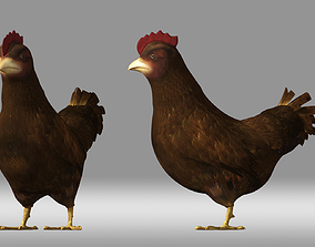 3D chicken hen poultry animation role