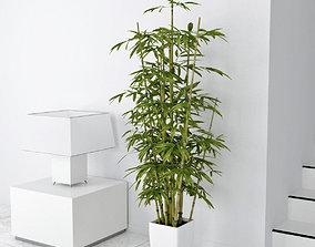 3D model bamboo