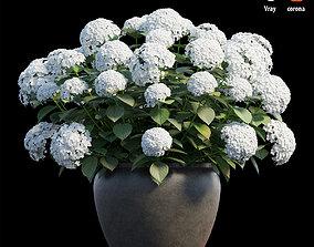 3D Hydrangea in planters set 02