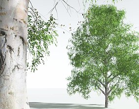 EVERYPlant Silver Birch 01 --20 Models-- 3D