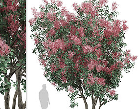 Set of American Smoketree or Cotinus obovatus 3D model 3