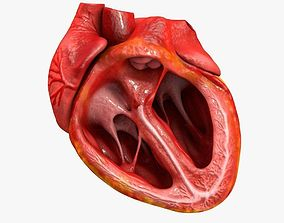 3D model Animated Realistic Human Heart - Medically