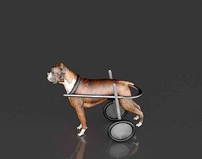 Dog Wheelchair 3D model science