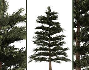 pine tree 3D asset low-poly