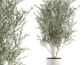 3D Decorative olive tree in flowerpots 646