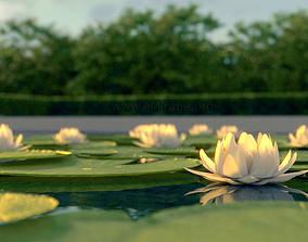 lotus flower 3D