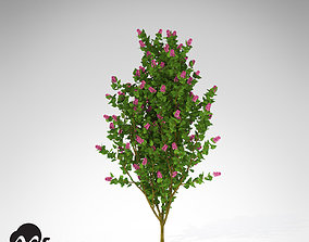 XfrogPlants Common Lilac 3D model