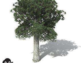 3D XfrogPlants White Kauri