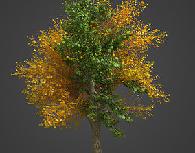 2021 PBR Field Maple Collection - Acer Campestre 3D model