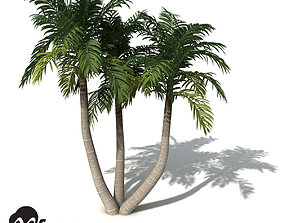 XfrogPlants Bangalow Palm 3D model