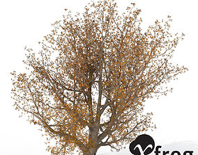 XfrogPlants Autumn English Oak 3D