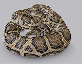 Rigged Burmese Python 3D model VR / AR ready