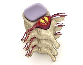 Human spine in details 3D asset