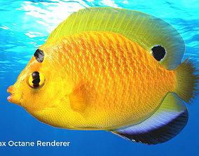 Yellow Angel Fish 3D model