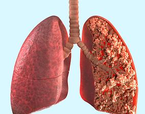 alveoli lungs 3D model