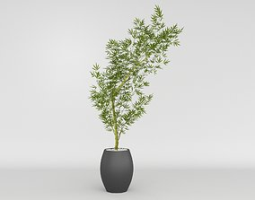 Bamboo Mosso Plant 3D