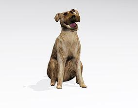 3D model pet Sitting dog
