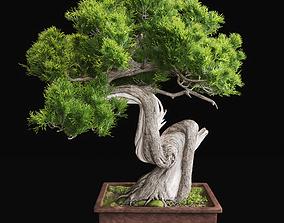 Bonsai 2 3D model