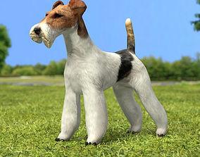 Wire Fox Terrier 3D model