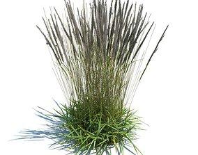 3D Prairie Grass Patch
