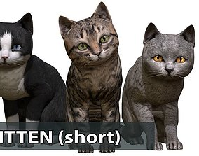 3D asset Kitten short