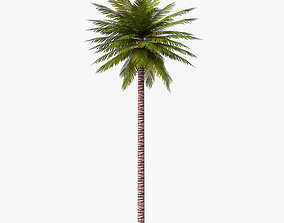 Date Palm 01 Game Ready 3D model