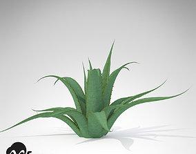Century Cactus 3D model