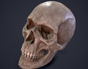 3D asset low-poly Skull