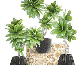 3D Collection of plants Frangipani