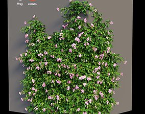 Rose plant set 36 flower 3D model