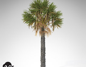XfrogPlants Palmetto 3D