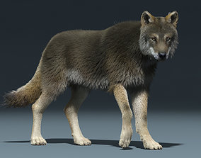 animated 3d Wolf animal Animated Rigged wolf werewolf