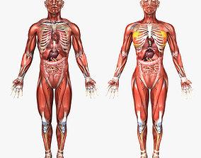 Human Male and Female Anatomy 3D model