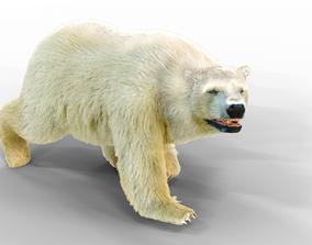 3D model White Bear Fur animated