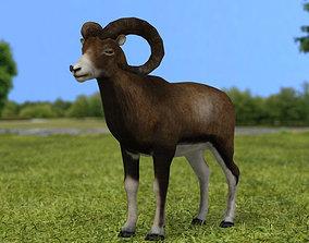 3D Mouflon