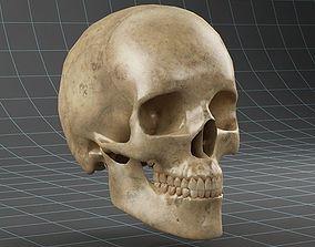 Anatomy skull 02 3D model