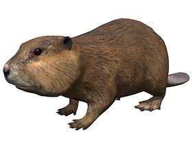 Beaver 3D asset animated