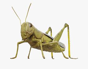 3D asset Grasshopper Rigged