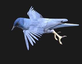 3D model blue bird animated