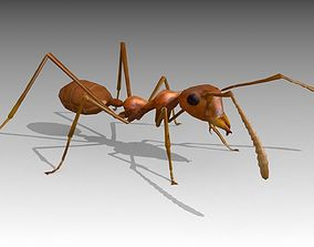 3D model animated Weaver Ant