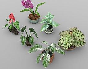 3D model Plants Set 1
